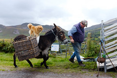 Untitled (kenwalton) Tags: animal animals attire clothes clothing countykerry dog dogs donkey europe european hat hats headgear ireland kerry mammal mammals outfit pet pets photography street streetphoto streetphotography urban ringofkerry streetphotographer