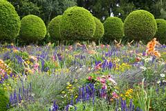 Vibrant flower beds, formal shrubs - Parc de Sceaux (Monceau) Tags: parcdesceaux sceaux france flower beds vibrant shrubs balls