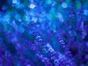Trust in dreams, for in them is the hidden gate to eternity (Karsten Gieselmann) Tags: abstrakt blau bokeh czjpancolar50mmf18 dof em5markii grün lavendel lila microfourthirds natur olympus pflanzen schärfentiefe strauch sträucher türkis vintagelens abstract blue bush bushes green impression kgiesel lavandula lavender m43 mft nature purple turquoise violett