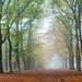 Beleef de kleurrijke herfst en leg vast