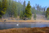 Peaceful (Amy Hudechek Photography) Tags: swan madison river yellowstone national park amyhudechek fog fall autumn october wildlife nature