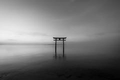 Twilight 'Shirahige Shrine' (HarQ Photography) Tags: monochrome blackandwhite xf1024mmf4rois fujifilm fujifilmxseries xt2 japan shiga shrine torii landscape lakebiwa elitegalleryaoi bestcapturesaoi aoi