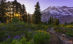 Sunset in the Mountains (Mt Rainier NP, Paradise) (Sveta Imnadze) Tags: nature landscpae mountains mtrainier mtrainiernp paradise hiking trail morainetrail sunset sunburst wildflowers wa