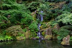 A Waterfall in Portland Japanese Garden, Portland, Oregon, USA (takasphoto.com) Tags: apsc america color eeuu estadosunidos fuji fujixt1 fujixt1fujifilm fujifilm fujinon fujinonlensxf18135mmf3556rlmoiswr fujinonxf18135mmf3556rlmoiswr garden gardens green japanesegarden lens mirrorless mirrorlesscamera northamerica oregon pacificnorthwest photography portland portlandjapanesegarden street streetphotography usa unitedstates unitedstatesofamerica verde westcoast xmount xt1 xtranscmosii xtransii xf18135 みどり アメリカ合衆国 ストリートスナップ フジノン フジフィルム ミラーレス 北米 日本 日本庭園 日本文化 米国 緑 緑色 美国 翠 西海岸 flickrclickx