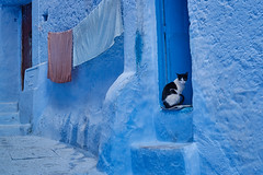 Cat on door step, Chefchaouen, Morocco (Alex_Saurel) Tags: detail door bleu maroc northafrica step maghreb street travel linge tamazɣa people almaghrib imeġrib sitting photospecs escalier doorframe ⵜⴰⵎⴰⵣⵗⴰ position animal marches imagetype laundry blue stairs porte fullframe afrique medina cat photojournalism archicategory rue streetscene scans stockcategories pleinformat المغرب chat ⵍⵎⵖⵔⵉⴱ photoreportage urbanisme sony50mmf14sal50f14