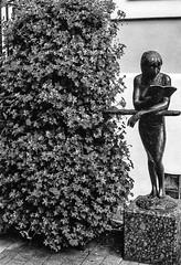 """Am Busch mit Buch...-On the Bush with the Book-B&W (Siggi-Dee) Tags: """"leica elmar 50mm f28 35mm b26w blackandwhite color digital film japan kodak leica leicam6 leicam9 leicamp m9 tokyo voigtlander street rangefinder leicam5 wetzlar solms"""