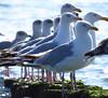 Beach Dishoek Holland (jschort10) Tags: zeeland dishoek strand beach sand seugulls birds meeuwen sunset women