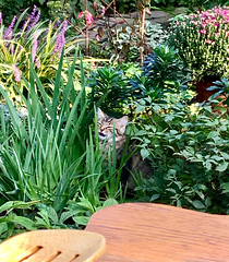 the tiger in the garden 🐱 🌸