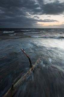 Driftwood - Sydspetsen