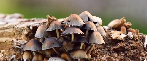 09.09.17 ..Mushrooms ..
