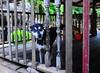 ,, Tinker Bell ,, (Jon in Thailand) Tags: dog k9 tinkerbell sillydog funnydog dogeyes dogears dogexpression red orange green nursenunsporch jungle themonkeytemple nikon nikkor d300 175528 woodenpickets orangebucket littledoglaughedstories