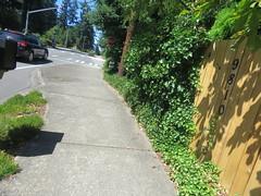 IMG_6494 (Andy E. Nystrom) Tags: bellevue washington wa bellevuewashington clydehill clydehillwashington