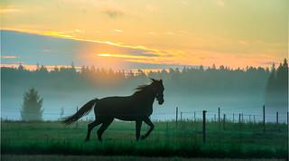 horse & sunrise