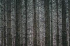 trees (hansekiki ) Tags: rügen kaparkona baum bäume multipleexposure mehrfachbelichtung canon 5dmarkiii