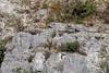 Renards roux (distance 400 m environ) (sfrancois73) Tags: mammifère renardroux faune