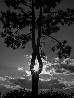 Setting Sun through the Conjoined Tree in Lake Tahoe
