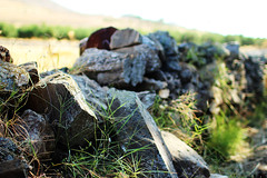 rocks & greens (Katrinitsa) Tags: paros2017 paros greece greekislands island rocks rock wall street streetphotography landscape nature village villagelife villagescape urban bokeh focus zoom macro detail canon canoneosrebelt3i canoneos600d ef35mmf14lusm sunlight light shadows daylight fields field sunshine plant reflections summer cyclades aegean mediterranean awesome amazing dream dreamy art artistic magic magical beauty beautiful travelphotography travel happy happiness joy perfect best imagination inspiration greens flowers flower weeds weeding relaxing relax colors countryside peace