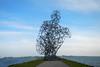 Crouch man | Exposure (davidvankeulen) Tags: europe europa flevoland provincieflevoland lelystad markermeer ijsselmeer crouchman hurkendeman exposure strekdamhoutribsluizen antonygormley steal staal davidvankeulen davidvankeulennl davidcvankeulen urbandc