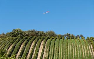 Kite Above Vineyard