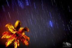 DRAG_OF_STARS_MUSSURIL_NAMPULA_MOZAMBIQUE (paulomarquesfotografia) Tags: stars drag sky night arrasto de estrelas noite escuro darkness ceu paulo marques pentax k5 tokina28mmf2 8 arvore coqueiro coconut tree long exposure longa exposição astrofotografia astrophotography