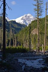 Tahoma and Tahoma (Sotosoroto) Tags: dayhike hiking mtrainier mtrainiernationalpark mountains cascades gobblersknob washington lakegeorge tahomacreek westsideroad