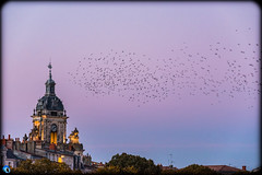 Welcome to L.R (bffpicturesworld) Tags: larochelle france october flightofbirds shading peace