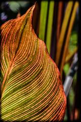 DSC_3076 (DianeBerky19) Tags: nikon d500 70300mm flowers flora leaf