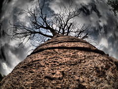 Baobab trees seen on the road... (Kristoffersonschach) Tags: olympus rotel africa tanzania adansonia baobab tree