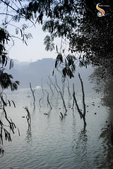 Feeling Blue (Shikher Singh) Tags: hauzkhas lake pond tank trees dry withered leaves delhi evening blue shikhersimagery