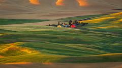 Heart of Palouse (P Matthews) Tags: palouse crops landscape house fields rollinghills wheat hills barn sunrise red