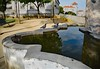 Visitors at the Fountain (Jocelyn777) Tags: fountains water waterreflections reflections birds pigeons textured alentejo evora portugal