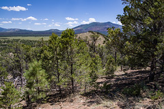 Slate Mountain Trail (Coconino National Forest) Tags: arizona coconinonationalforest flagstaffrangerdistrict forestservice kendrickmountain pentaxk1 slatemountain usfs flagstaff forest hike hiking oudoors outdoors trail unitedstates