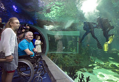 0809_01 (KnyazevDA) Tags: disability disabled diver diving amputee underwater wheelchair