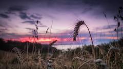 SunSet Pointe du Roselier (zqk09) Tags: gnc france bretagne canon sun sunset sunlight soleil coucher nature paysage landscape red rouge love 1300d