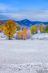 A Seasons Colors (rosacruzjl) Tags: autumn chatfieldstatepark colorado fall littleton atmosphere beautiful color colorful forest fresh gold landscape leaf leaves mountain nature outdoors pretty scenery scenic snow tree weather yellow