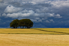 There be a storm brewing. (alan.irons) Tags: storm brewing landscape wheat barley farming trees fields scotland aberdeenshire copse canon eos1dxmk2 clouds