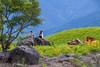 IMG_8011 (Rj Wu) Tags: 台灣 台東 池上 六十石山 金針花 花東縱谷 夕陽 黃昏 雲 天空 山 山谷 植物 太陽 耶穌光 斜射光 霞光 風景