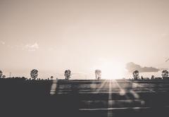 Nostalgia (mripp) Tags: art kunst vintage retro old sunset sonnenunertagng road roadside street black white mono monochrom schwarz weiss sony rx1rii nostalgia