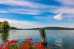 Paddling is like flying... (Yarin Asanth) Tags: sup flowers rhinefall rhine tour paddling water blue yarinasanth gerdkozik