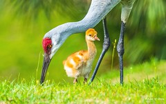 Mother and Her Baby (Thank you, my friends, Adam!) Tags: color colorful colors 色彩 多姿 beautiful gorgeous gallery fine art photography photographer excellent interesting explore fun nice unique 鲜花 美丽 长焦 长焦镜头 尼康 镜头 中佛州 野生动物 保护区 单反 lens central florida wildlife macro closeup flower beauty curve nikon dslr 不完美的美 adamzhang orlando lakemary nikkor super telephoto lenses teleconverter ngc 漂亮 mother baby 母子