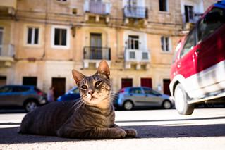 thrivers on islands #106 (Cat Village, St. Julians, Malta)