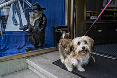 Coolness (Monty May (OBSERVE)) Tags: hemer germany street streetphotography dogs humour