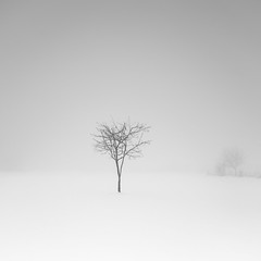 A Touch of Cold lii (ArztG.|Photo) Tags: square mono fine art austria atmosphere arztg|photo yup myfavs