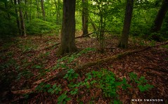 Forest Light (mswan777) Tags: hike nature outdoor scenic quiet michigan stevensville fallen plant nikon d5100 sigma 1020mm landscape light glow growth