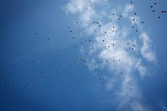 Passing of the Flock (janmalteb) Tags: blue sky birds clouds flock passing vögel himmel blau wolken canon eos 1000d