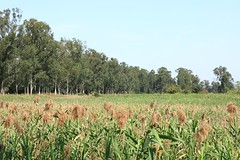 Field (superzookeeper) Tags: field green canoneos5dmarkiv ef2470mmf28liiusm 5dmk4 5dmkiv hk hongkong namsangwai eos skyline grass yuenlong sky digital favorites landscape