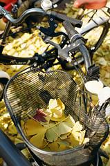 07640019 (_._13) Tags: 35mmfilm kodakcolor200 filmphotography analoguephotography minoltax700 autumn gingko 필름사진 가을 은행나무 자장거 35ммплёнка плёночнаяфотография плёнка осень