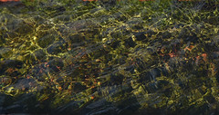Weedy Water Trough (maytag97) Tags: maytag97 nikon d750 trough abstract weed weeds wave ripple green