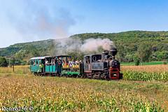 CFI Brad 764-243 - Hosman by Desiro256 - Locomotiva cu aburi 764-243 a CFI Brad apropiindu-se de statia Hosman dinspre Cornatel cu un tren special compus din 3 vagoane pline de turisti.  16.09.2017