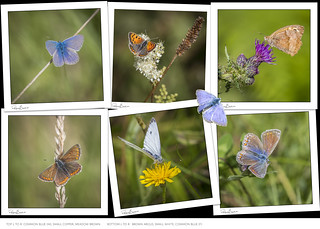 Butterflies I photographed this weekend